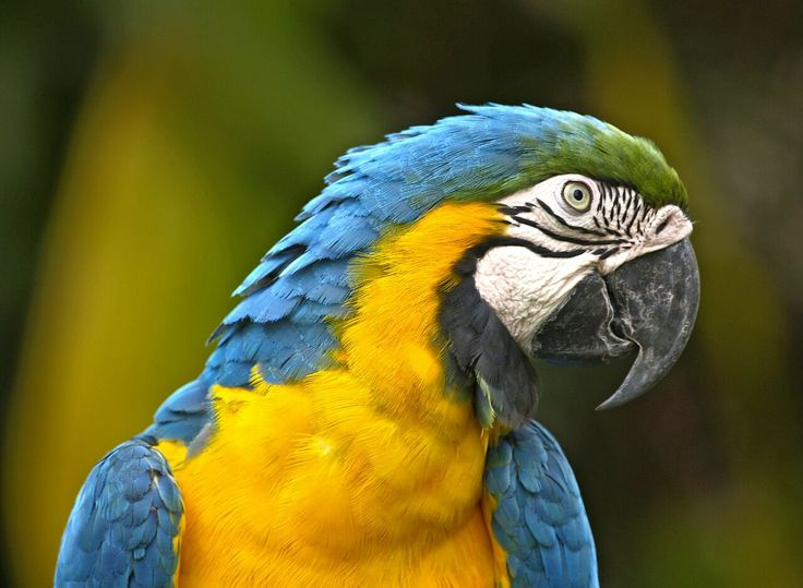 Parrot - 10 Reasons to Visit South America