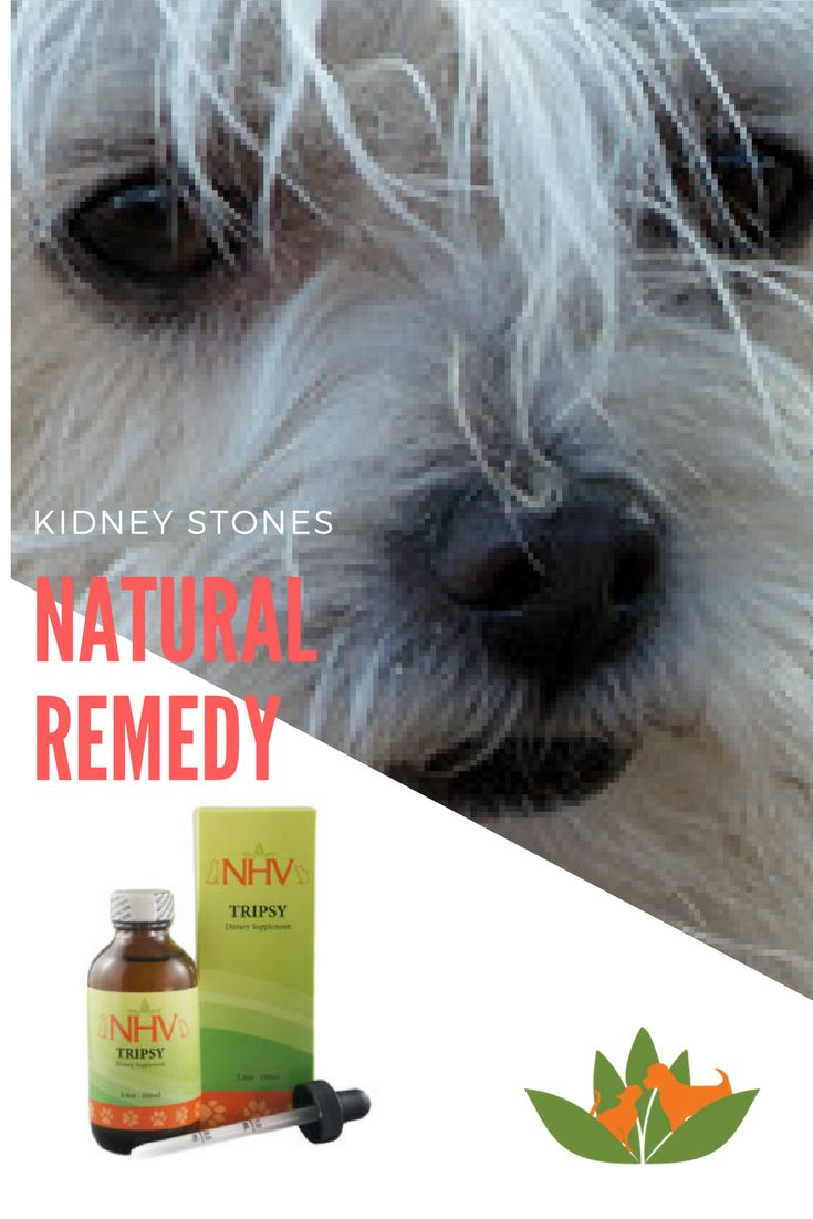 Canine herbal therapy - What Is Struvite Stones In Dogs How Does Nhv Tripsy Help