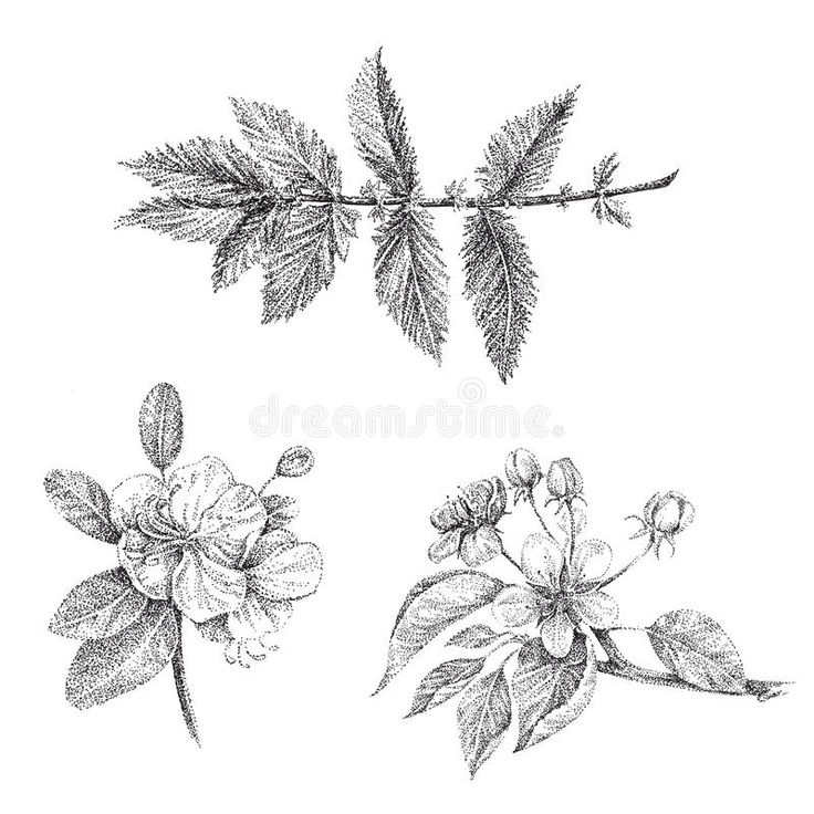 Image result for apple blossom tattoo