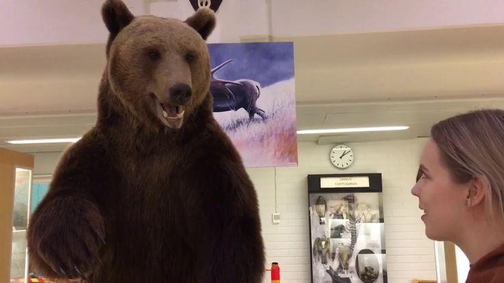Oulun yliopiston eläinmuseon viimeisen päivän tunnelmia
