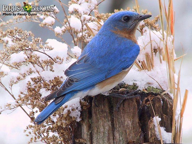 beautiful bird winter ndash - photo #19
