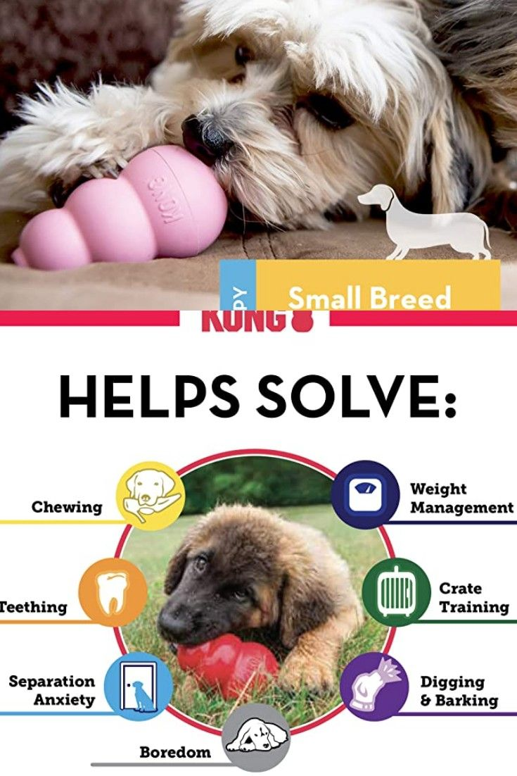 Pin On Dog Care And Training Tools