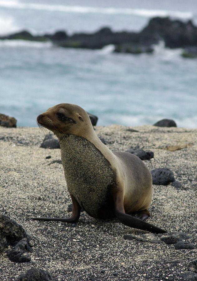(+16) Экскурсия на Галапагосские острова