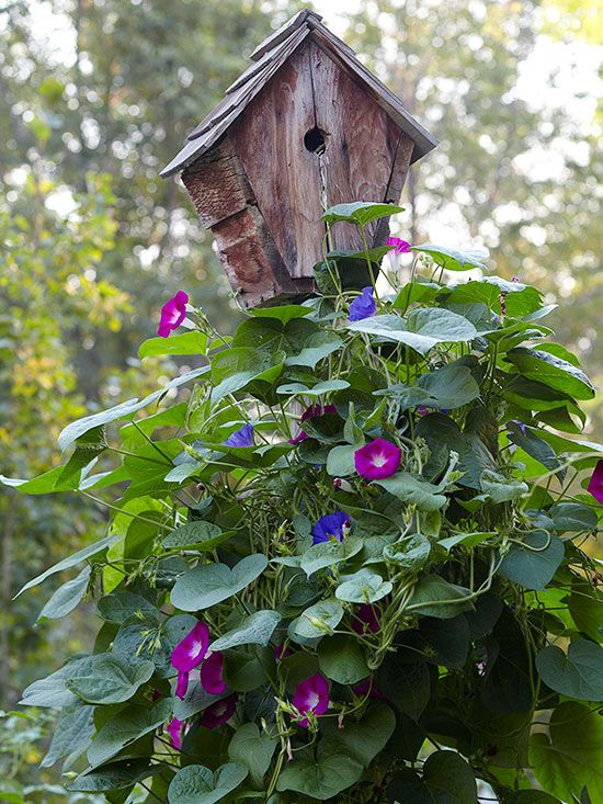 Welcome Wildlife! Asst. colors of morning glories trailing up a rustic birdhouse for hole-nesting species, e.g. bluebirds and wrens.