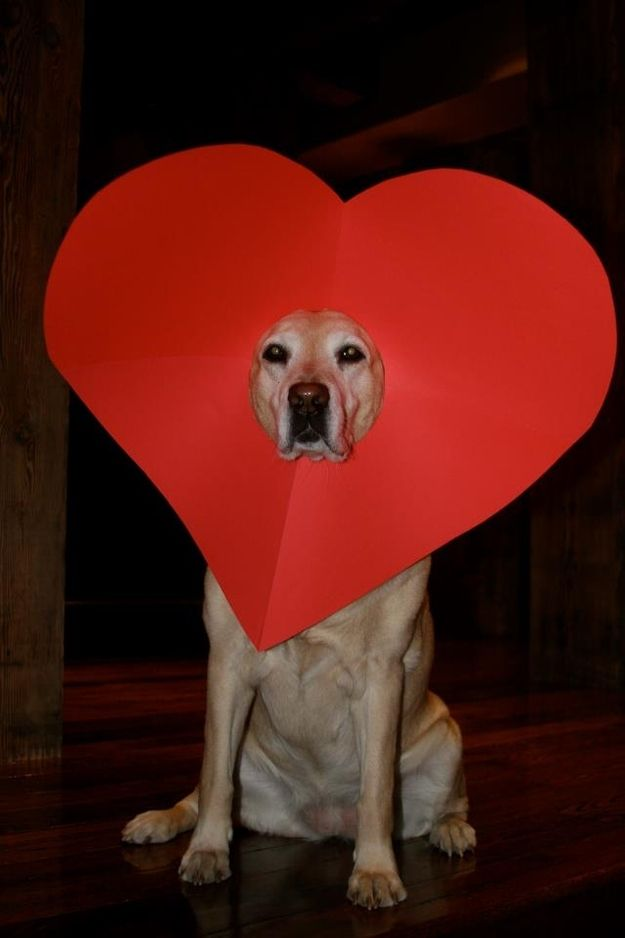 """Happy Valentine's Day to the """"Amazing Photography"""" Group Board Members! :-). Dog Valentine Heart"""