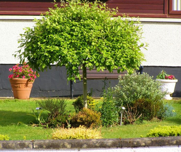 17 best ideas about arboles para jardin on pinterest - Jardines pequenos ideas ...