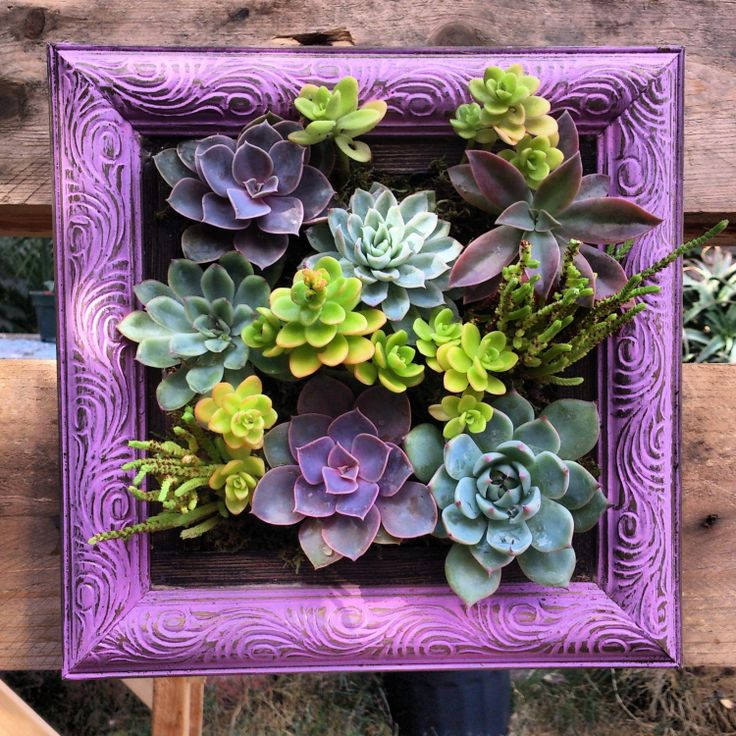 Nice Picture Framed Vertical Succulent Garden By SucculentWonderland, $70.00