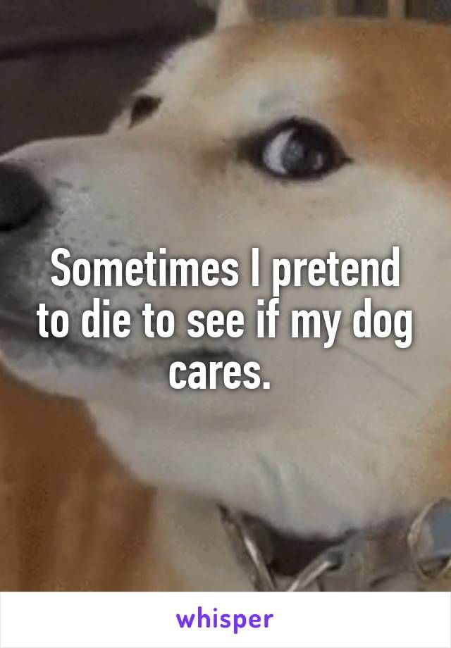 Sometimes I pretend to die to see if my dog cares.