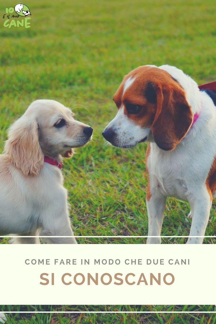 Vuoi fare in modo che due cani si conoscano senza problemi?