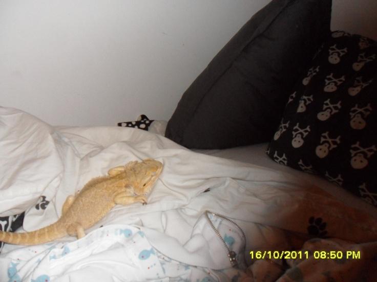 sleeping in my bed