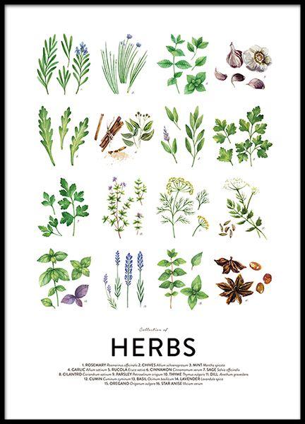 Culinary herbs, posters in de groep Posters / Afmetingen / 30x40cm bij Desenio AB (8589)