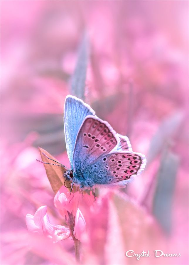 "Beautiful Butterflies: Pastel pink ""Spring breeze"" by ..."