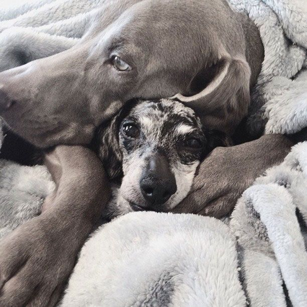 Harlow and Sage//