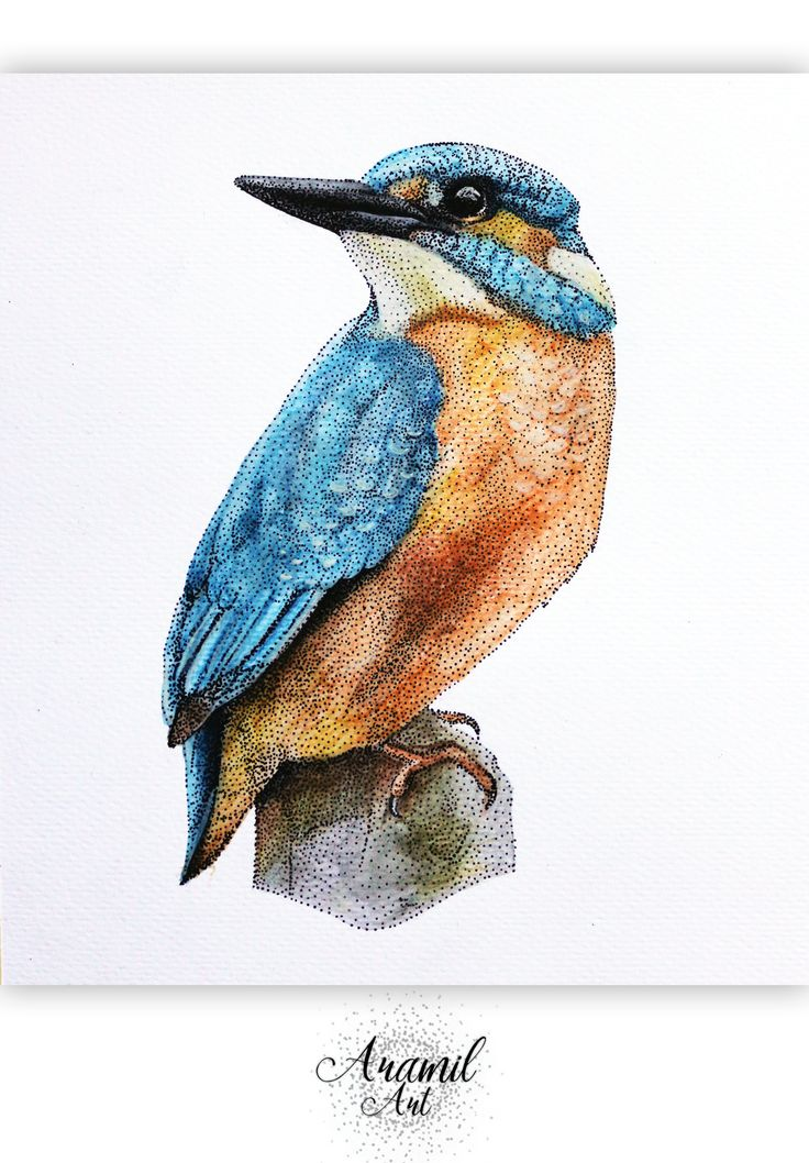Kingfisher drawing, created by using about a thousand dots and colored with watercolour pencil. Art by Petra Jánosi. Come and check on FB. :)  https://www.facebook.com/aramilart