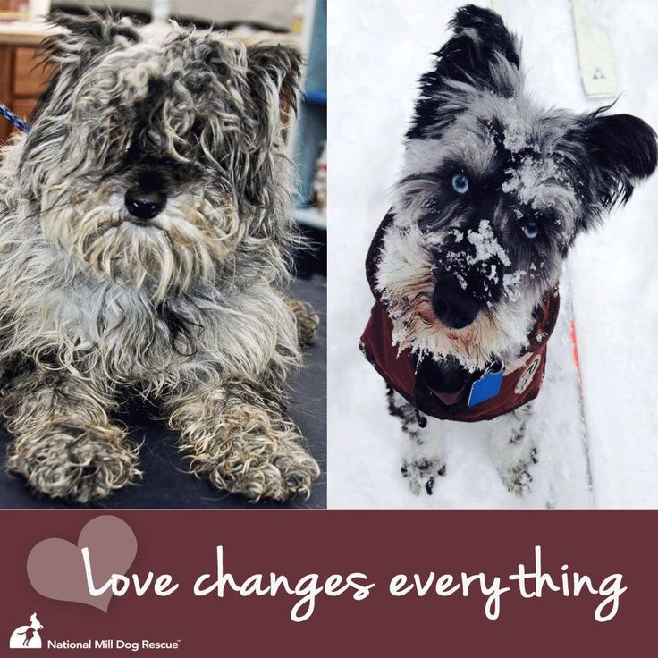 Puppy Mill Rescue Before And After