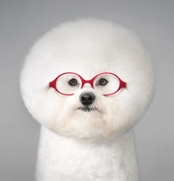 : Red Glasses, Photography Annual, Creative Review, Advertising Categori, Aunts, Doggie Glasses, Advertising Design, White Dogs, Best Ads