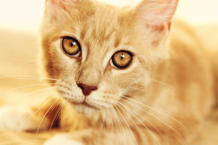Kitty by Andy Fialova
