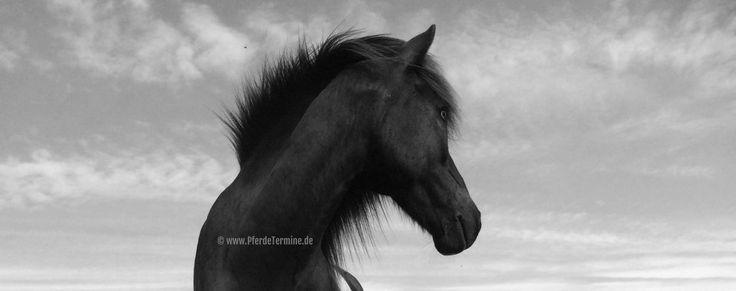 Pferde gesund halten - richtig trainieren So. 15.1.17 in 41066 Mönchengladbach (Nordrhein-Westfalen (NRW)), Nina Reich: Ein Fachseminar für reitweisenübergreifendes Training. In diesem Seminar geht es um die physiologischen Kenntnisse des Pferdekörpers während des Trainings. Hauptziele sind gesunde, leistungsbereite Pferde als langjährige Partner wie auch Training die den Team Pferd- Mensch Spaß macht. Ein Vortrag mit [...] Lade Karte ... Mönchengladbach Dünner …