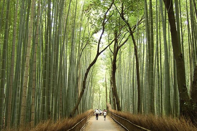 Bamboo forest in Arashiyama, KyotoArashiyama Kyoto, Arashiyama Bamboo, Bamboo Forests, Beautiful Places, Japan 2014, Amazing Places, Amazing Photos, Kyoto Japan, Travel Photography