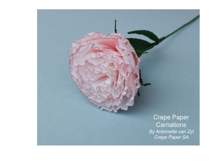 We just love the soft effect given to this carnation flower.