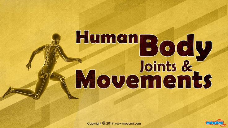 Human Body Joints and Movements - Human Body Joints hold the skeleton together and support movement. In human body has 3 main types of joints; Fibrous, Cartilaginous and the Synovial joint. For more science stuff for kids, visit: http://mocomi.com/learn/science/