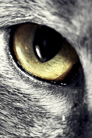 The eye of the ... wolf! Curley Wolf! :)|Қɽα₰؁                              …