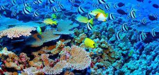 """Képtalálat a következőre: """"korall"""""""