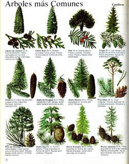 M s de 25 ideas incre bles sobre paisaje de hoja perenne for Arboles de jardin de hoja perenne