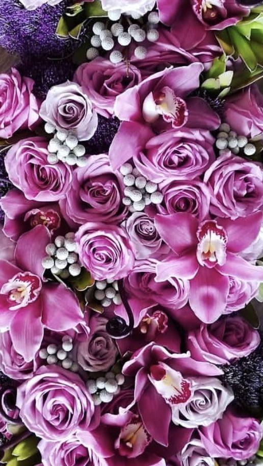 Don T Call Me Betty Lavender Fields Lavender Flowers Purple Flowers