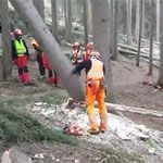 "Tree felling technique ""impressive"""
