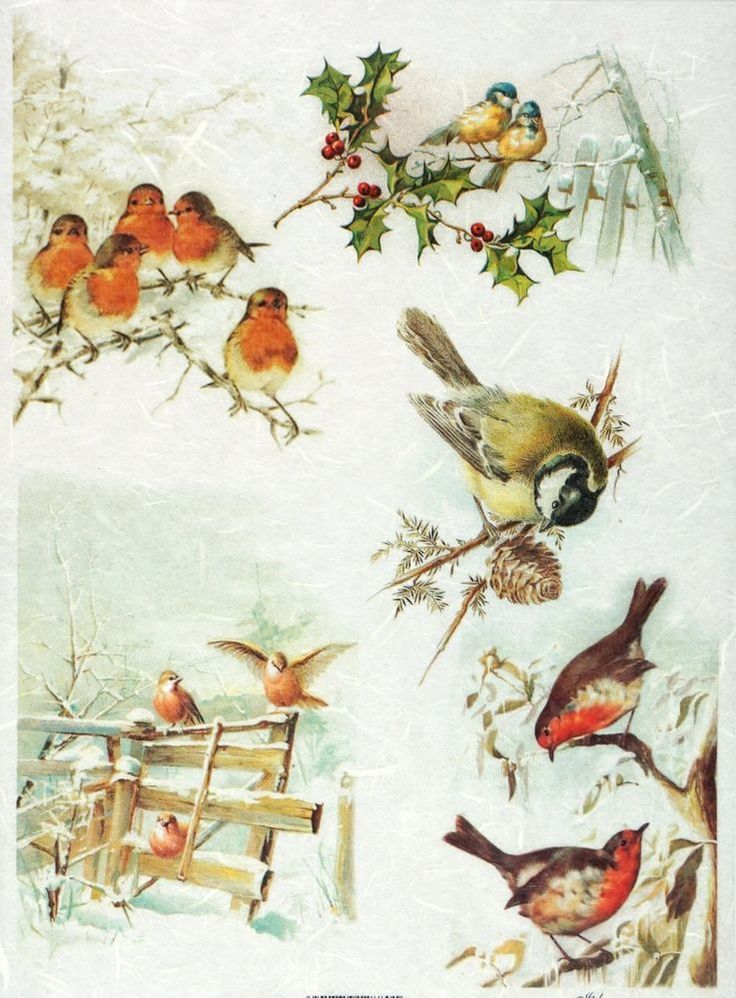 Rice Paper for Decoupage Decopatch Scrapbook Craft Sheet Vintage Winter Birds