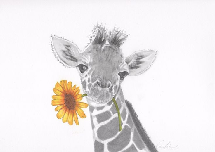 Original Handmade Nursery Art - Baby Giraffe with Sunflower by CustomPencil on Etsy