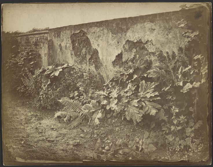 Robert Burrows - Garden Wall, 1850s