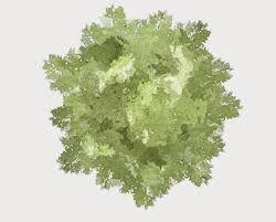 """Résultat de recherche d'images pour """"tree plan design promarker"""""""