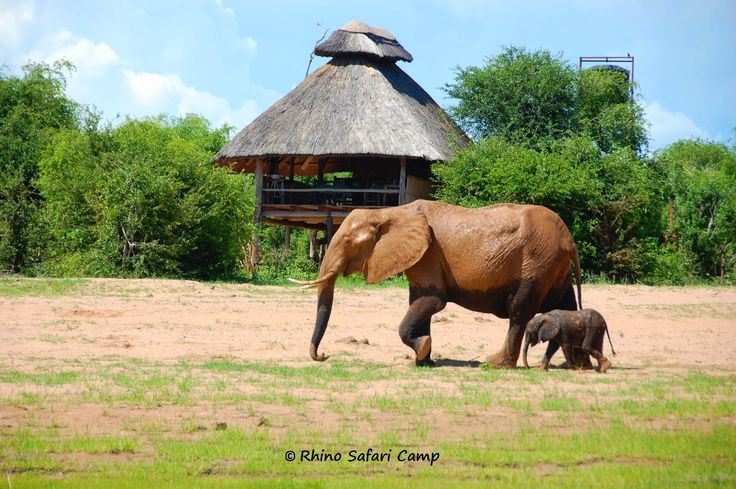 Rhino Safari Camp in Zimbabwe - a superb destination for wildlife viewing