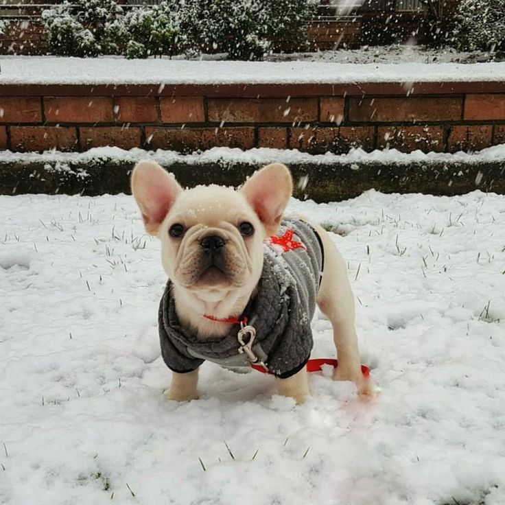 Throw back to my first snow day. Winter is coming!! ❄