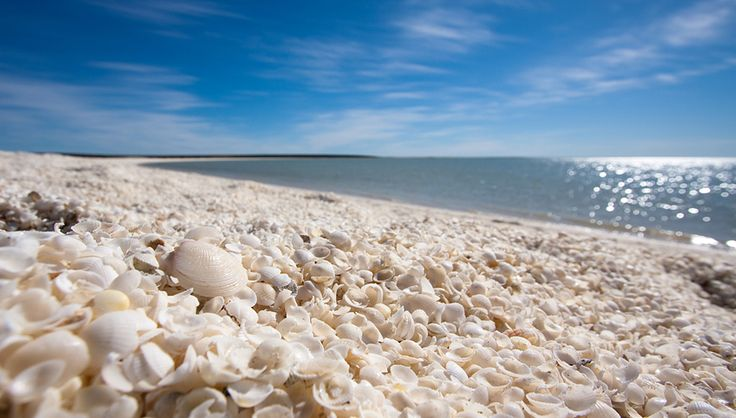 Shell Beach in the Shark Bay region of Western Australia. This beach is made entirely of shells! How cool is that?!