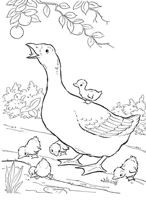 104 best templates for pillowcases images on pinterest - Baby Chick Coloring Pages Print