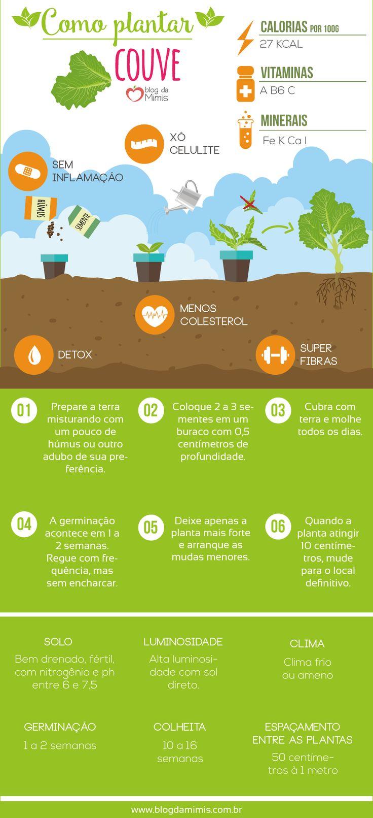 Como plantar couve e aproveitar seu benefícios - Blog da Mimis #plantar #couve #detox #orgânico #horta