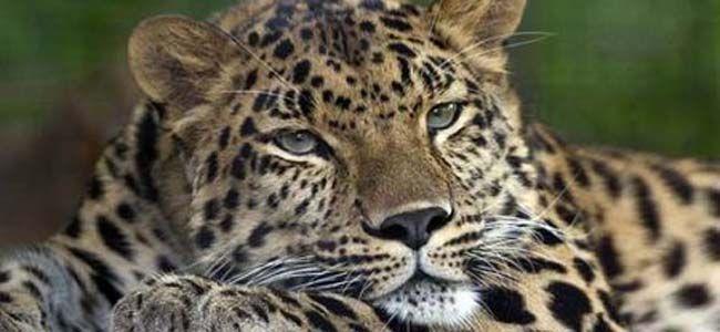 Entro il 2050 a rischio 440 specie animali