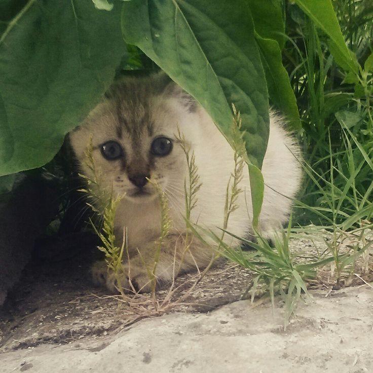 Cucciolo di gatto che si nasconde #agriturismoilportone #animali #abruzzo