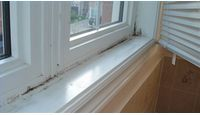 How to Remove Black Mold From Windows  lots of links about black mold issues.