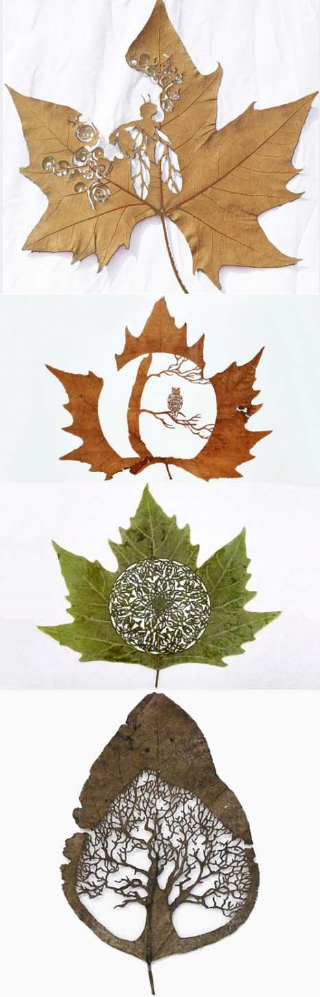 Leaf art ... Just amazing must take an age to do!