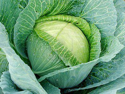 Читайте також також Лазанья з капустяного листя Полента Паста з овочами ТРАДИЦІЙНИЙ ШВЕЙЦАРСЬКИЙ СНІДАНОК З КАРТОПЛІ(КАРТОПЛЯ РЕШТІ) Корисний гречаний сніданок Класична лазанья! Простий спосіб розбору … Read More