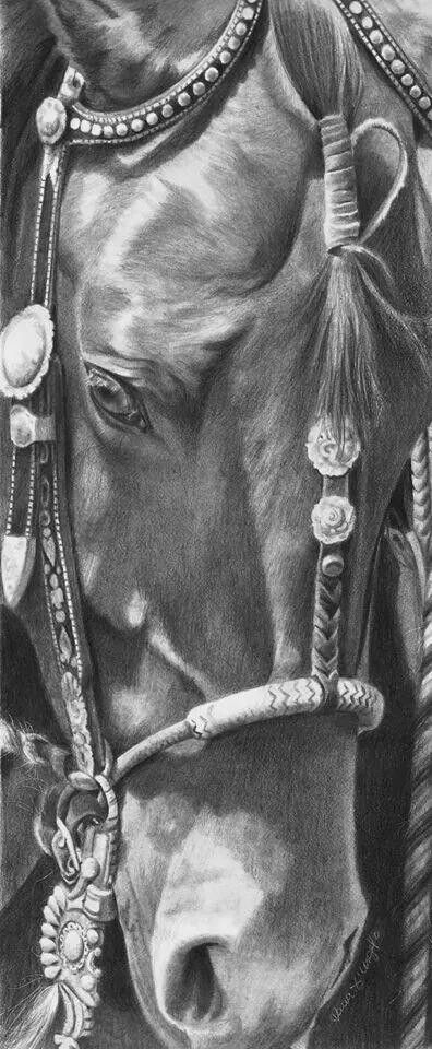 Horse sketch of face and bridle. Gorgeous horse art, horse drawing.