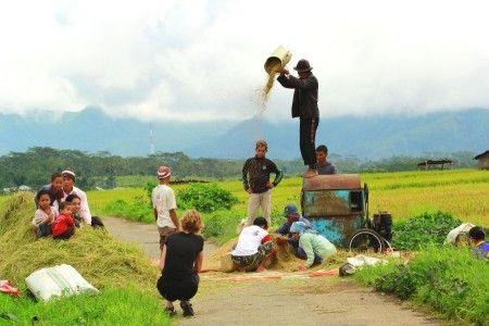 Leonardus Nyoman: Sekelompok petani yang sedang memanen,dan seorang turis asing yang asik menikmati pekerjaan mereka