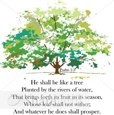 Psalms A Tree And Trees On Pinterest