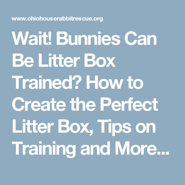 Wait! Bunnies Can Be Litter Box Trained? How to Create the Perfect Litter Box, Tips on Training and More! - Ohio House Rabbit RescueOhio House Rabbit Rescue