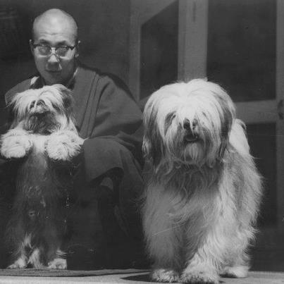 """""""Taking care of animals is essential to developing more happiness in human beings,"""" - HH Dalai Lama in an interview, June 2007, Australia"""