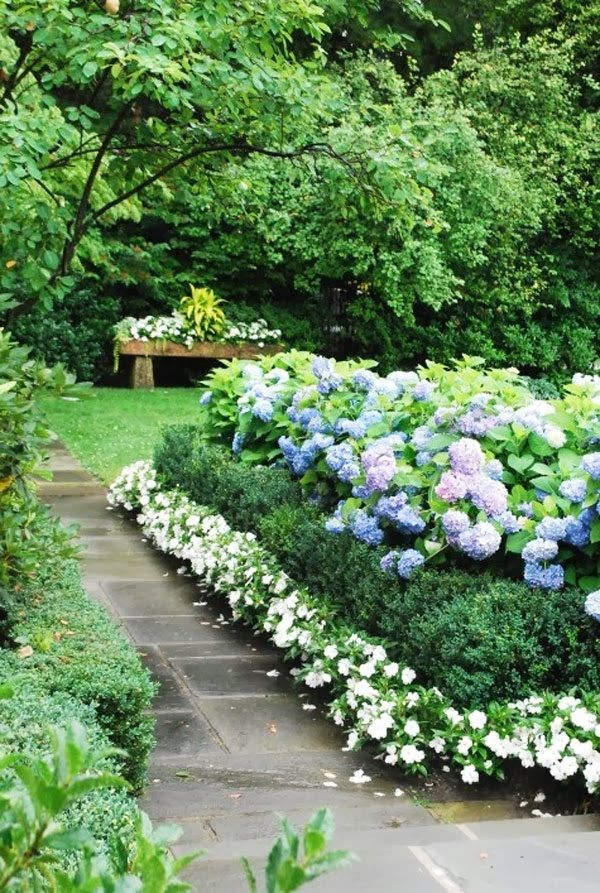 Landscaping Edging Plants : Blue hydrangea topiary garden terrace topiaries lilacs border